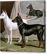 English Terriers Canvas Print