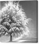 Enlightened Tree Canvas Print