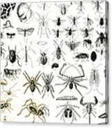 Entomology Myriapoda And Arachnida  Canvas Print