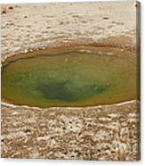 Ephedra Spring In West Thumb Geyser Basin Canvas Print