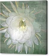 Epiphyllum Oxypetallum - Queen Of The Night Cactus Canvas Print