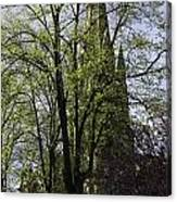 Episcopal Cathedral In Edinburgh Visible Through Trees Canvas Print
