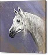Epona At Night Canvas Print