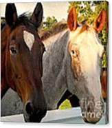 Equestrian Beauties Canvas Print
