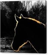 Equine Glow Canvas Print
