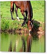 Equine Reflections Canvas Print