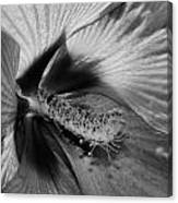 Essence Black And White Canvas Print