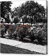 Esther Short Park Rose Garden Canvas Print