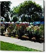 Esther Short Park Rose Gardens Canvas Print
