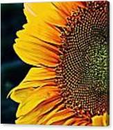Eternal Sun Canvas Print