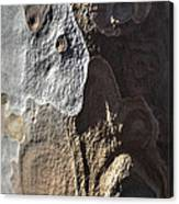 Eucalyptus Bark Abstract Canvas Print