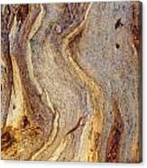 Eucalyptus Bark Canvas Print