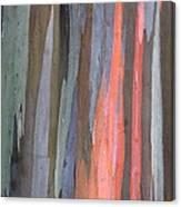 Eucalyptus Tree Bark Canvas Print