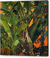 Eugene And Evans' Banana Tree Canvas Print