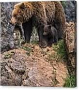 Eurasian Brown Bear 15 Canvas Print