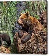 Eurasian Brown Bear 8 Canvas Print