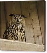 European Owl Canvas Print