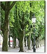 European Park Trees Canvas Print