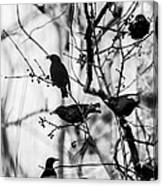 European Starlings Canvas Print