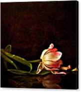Even Though A Flower Fades Canvas Print