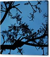 Evening Branches Canvas Print