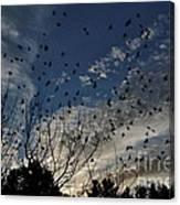 Evening Flock Canvas Print