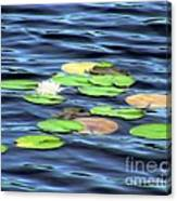 Evening Lake With Water Lily Canvas Print