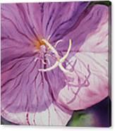 Evening Primrose Flower Canvas Print
