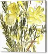 Evening Primroses Canvas Print
