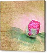 Evening Rosebud Canvas Print