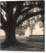 Evening Swing - Oak Tree - Altus Arkansas Canvas Print