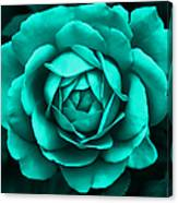 Evening Teal Rose Flower Canvas Print
