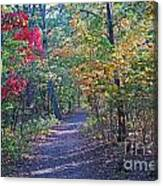 Evening Walk Thru The Woods Canvas Print