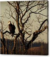 Evening Watch Canvas Print