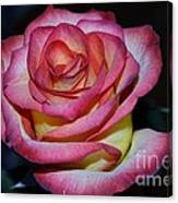 Event Rose Too Canvas Print