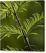 Ever Green Canvas Print