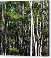 Everglade Magic Canvas Print