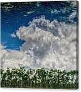 Reflected Everglades 0203 Canvas Print