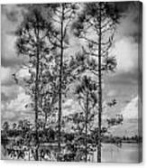 Everglades 0336bw Canvas Print