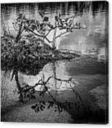 Everglades 0346 Canvas Print