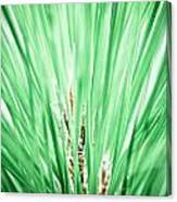 Everglades 10 Canvas Print