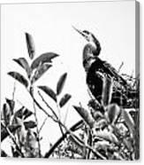 Everglades 20 Canvas Print