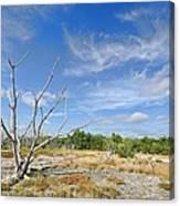 Everglades Coastal Prairies Canvas Print