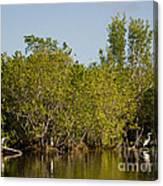 Everglades'  Egrets Canvas Print