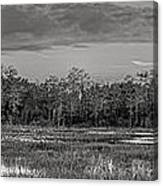 Everglades Panorama Bw Canvas Print