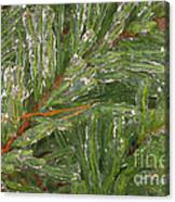 Evergreen Covered In Ice Canvas Print