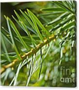 Evergreen Dream By Jrr Canvas Print