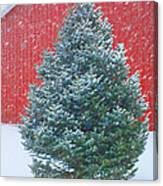Evergreen In Winter 2 Canvas Print