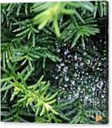 Evergreen Rain Canvas Print