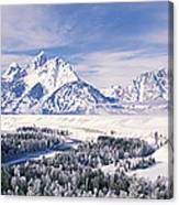 Evergreen Trees On A Snow Covered Canvas Print